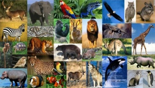 Imagen - Animales.png