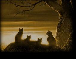 Los Gatos Guerreros Wiki Spotlight
