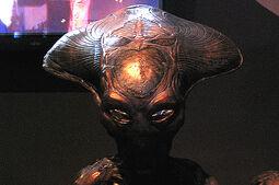 Especies aliens spotlight