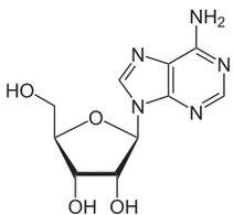 Adenosine2