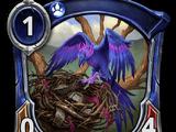 Nesting Raven