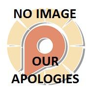 File:TEMP NOIMAGE.jpg