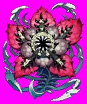 Raflesia