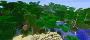 Neo-Tropical Forest
