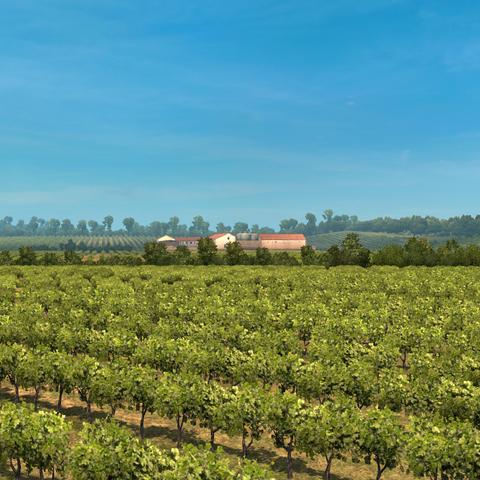 Wineyard Montpellier