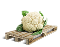 Cargo icon Cauliflower