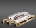 Cargo icon Frozen hake