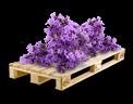 Cargo icon Lavender