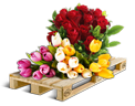 Cargo icon Cut flowers