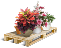 Cargo icon Potted flowers