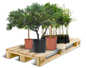 Cargo icon Containerized trees