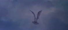 Pink Floyd Animated Dove