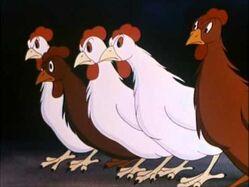 Animal Farm Chickens
