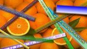 Oranges2008