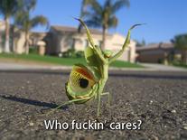 Wfc-螳螂