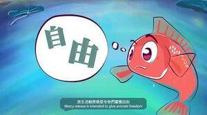 「放生前諗清楚」系列 - 魚魚篇《放生會否對生態平衡帶來衝擊?》(30秒版本)