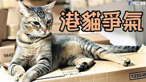 《港貓爭氣》—為藥房貓店長波子打氣〈原曲:爭氣〉|山卡啦x若智子