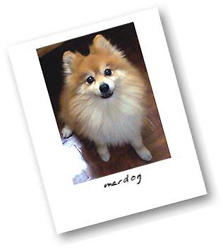 Macdog