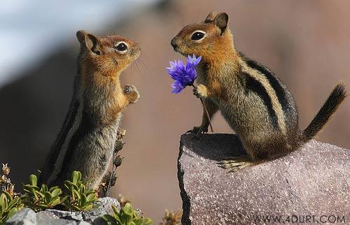 File:Funny Animal Love 6.jpg