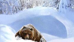 Ss bear calm