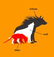 Canine comparison