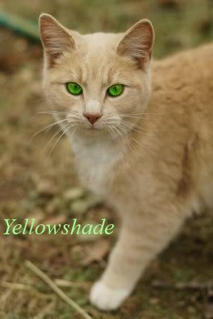 Yellowshade