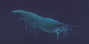 File:Krill.png