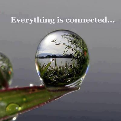 Image result for everything is connected