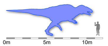 Acro size