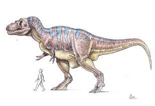 Rex size 3