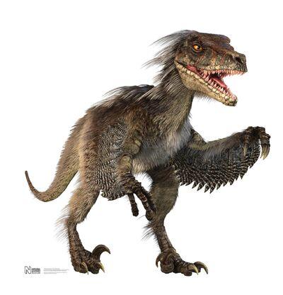 Velociraptornew