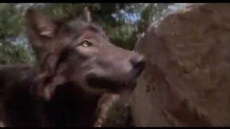 Benji the hunted dog movie clip