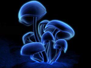 The Medusoid Mycelium