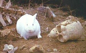 The Rabbit of Caerbannog