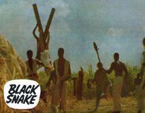 Fo black snake0072