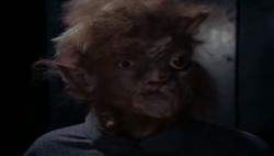 Evil Cat Creature