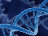 Biological Mimicry Mutation