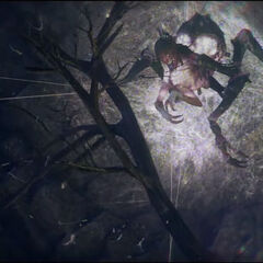 The Gorgon's nest