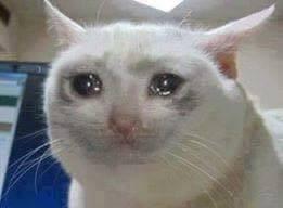 File:Crying cat.jpg