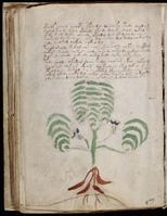 V.M. Page 8