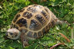 Turtle332