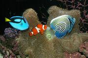 Salt-water-aquarium-fish1