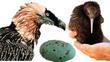 Birdicus