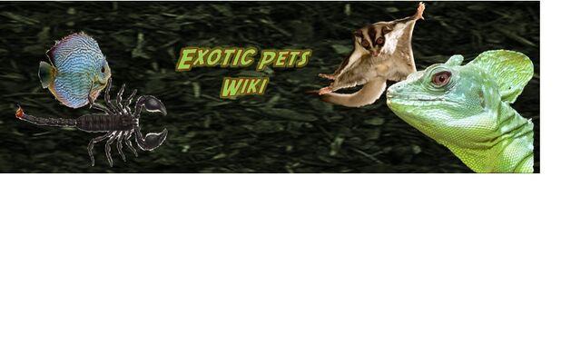 File:Exotic pets.jpg