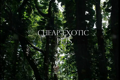 File:Theexoticpets.png