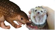 File:Mammal.png