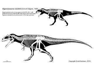 Giganotosaurus - 1(Skeletal(Scott Hartman))