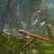 Audubon Institute Meganeuropsis