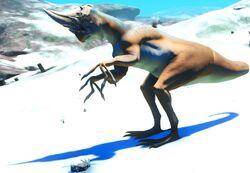 Thiasaurus Male