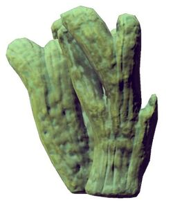 Cave Coral